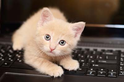 Beige kitten plays on a computer keyboard