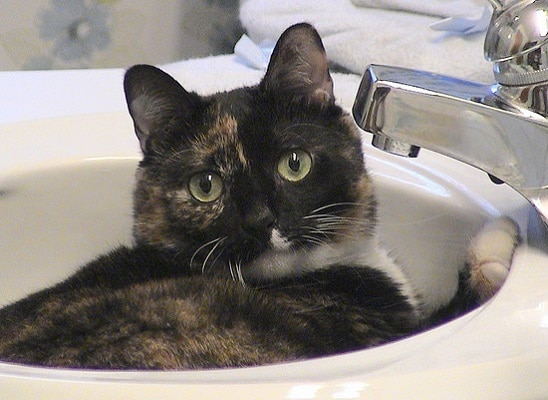 Black and orange calico lying in bathroom sink.