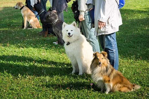 A group of dogs sitting near their trainers in a dog school.