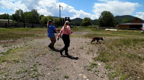 Two woman lead a dog on a leash on a rescue mission