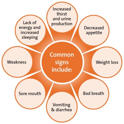 Common signs of kidney disease