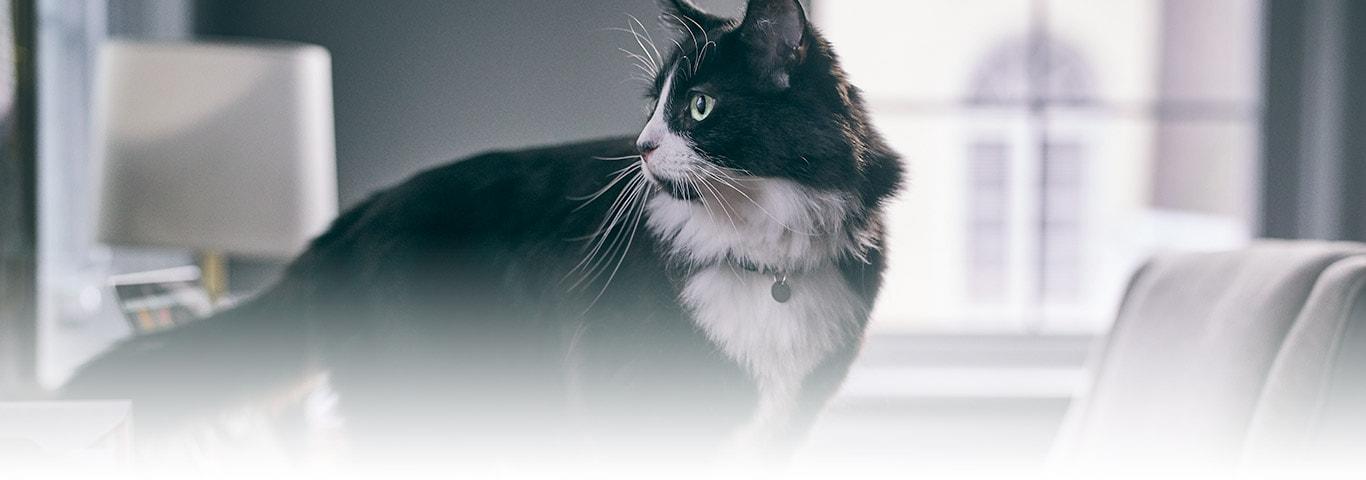 När kattungen växer så gör klorna det också! För att hålla dem fina kommer  kattungen att klösa. Klösning är ett naturligt sätt att markera sitt revir  och ... 6cf7b51e8a8bf