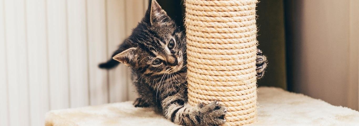 katt klöser möbler