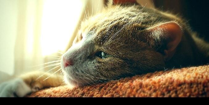 katt varm nos